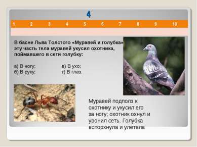 4 В басне Льва Толстого «Муравей и голубка» в эту часть тела муравей укусил о...