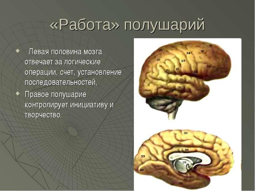 «Работа» полушарий Левая половина мозга отвечает за логические операции, счет...
