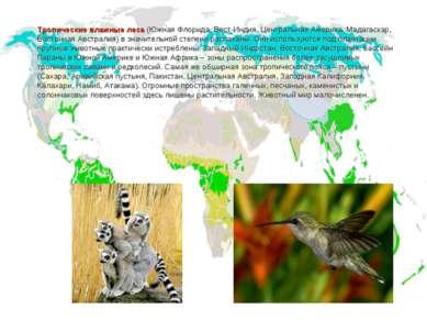 Тропические влажные леса (Южная Флорида, Вест-Индия, Центральная Америка, Мад...