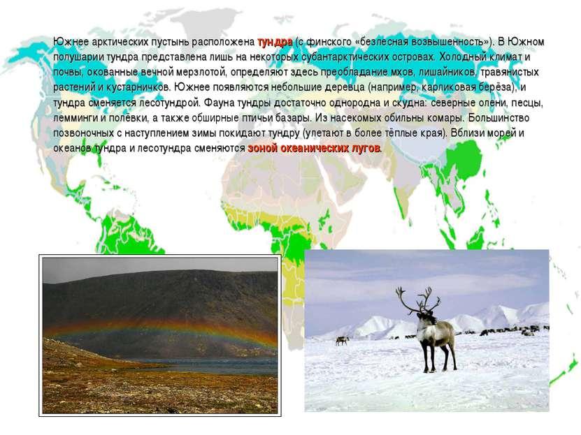 Южнее арктических пустынь расположена тундра (с финского «безлесная возвышенн...
