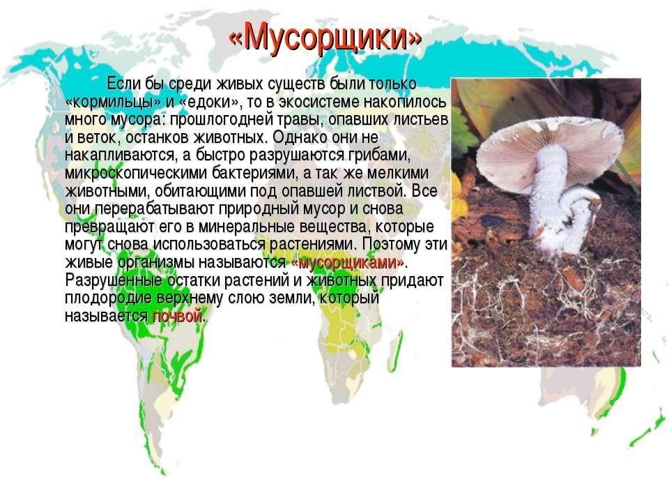 «Мусорщики» Если бы среди живых существ были только «кормильцы» и «едоки», то...
