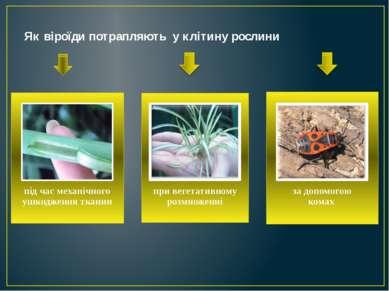Як віроїди потрапляють у клітину рослини