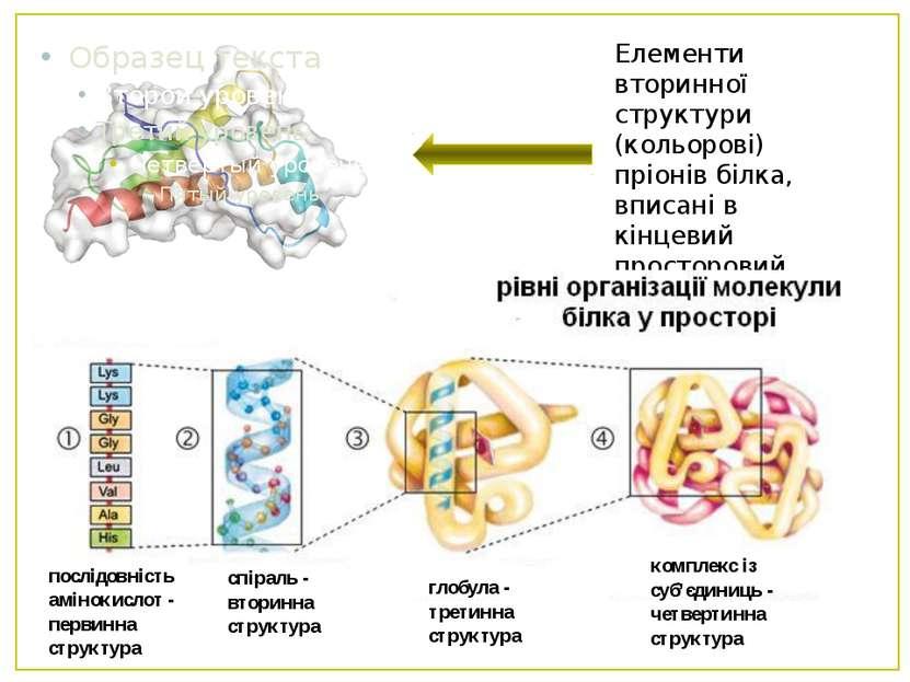 Елементи вторинної структури (кольорові) пріонів білка, вписані в кінцевий пр...