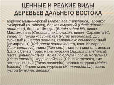 абрикос маньчжурский (Armeniaca manshurica), абрикос сибирский (A. sibirica),...