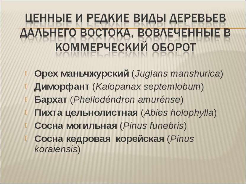 Орех маньчжурский (Juglans manshurica) Диморфант (Kalopanax septemlobum) Барх...