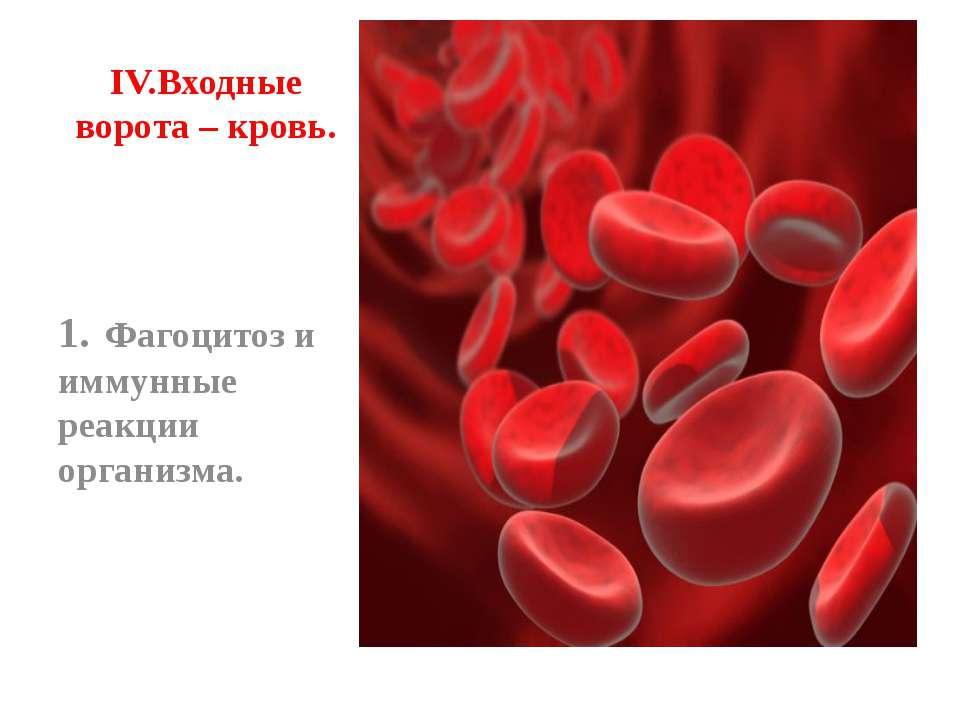 IV. Входные ворота – кровь. 1. Фагоцитоз и иммунные реакции организма.
