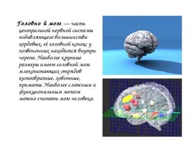 Головно й мозг — часть центральной нервной системы подавляющего большинства х...