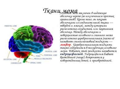 Ткани мозга Головной мозг заключен в надежную оболочку черепа (за исключением...