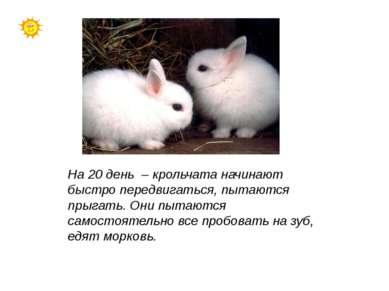 На 20 день – крольчата начинают быстро передвигаться, пытаются прыгать. Они п...