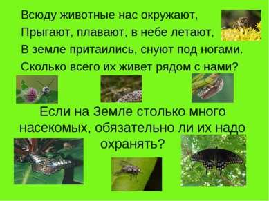 Если на Земле столько много насекомых, обязательно ли их надо охранять? Всюду...