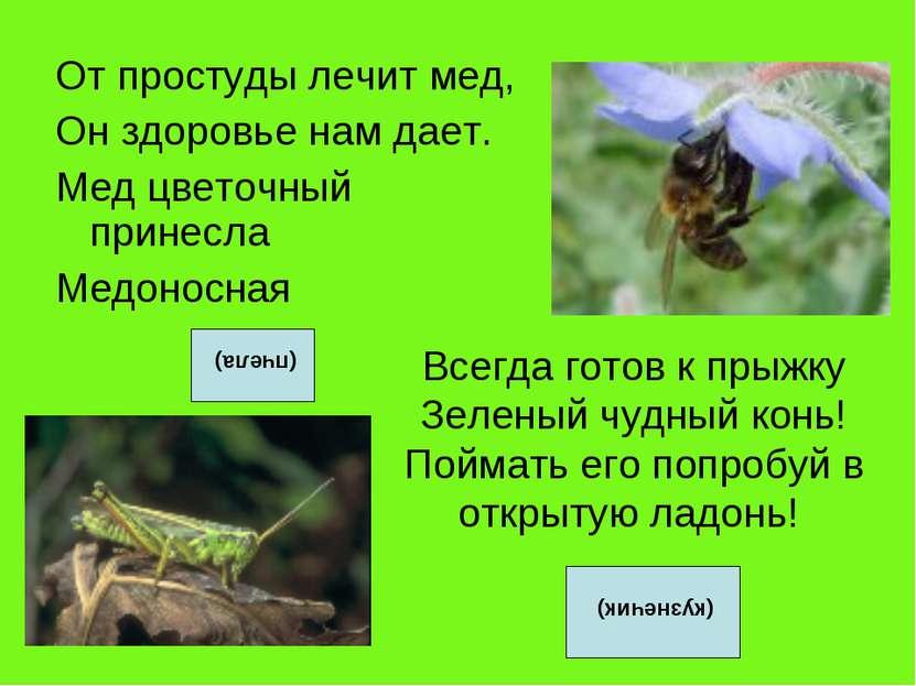 От простуды лечит мед, Он здоровье нам дает. Мед цветочный принесла Медоносна...