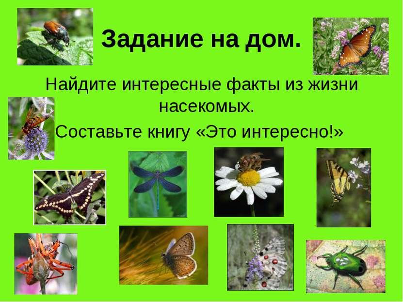 Задание на дом. Найдите интересные факты из жизни насекомых. Составьте книгу ...
