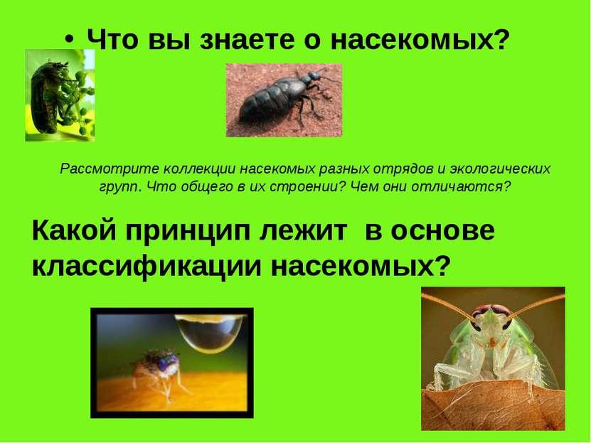 Что вы знаете о насекомых? Какой принцип лежит в основе классификации насеком...
