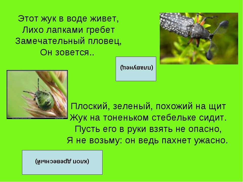 Этот жук в воде живет, Лихо лапками гребет Замечательный пловец, Он зовется.....