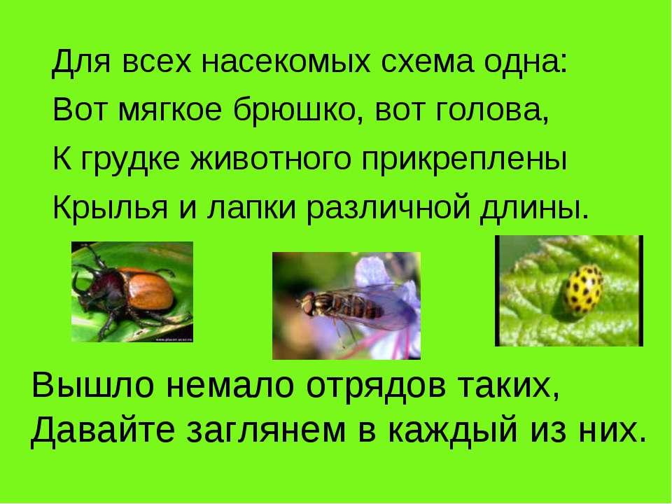 Для всех насекомых схема одна: Вот мягкое брюшко, вот голова, К грудке животн...