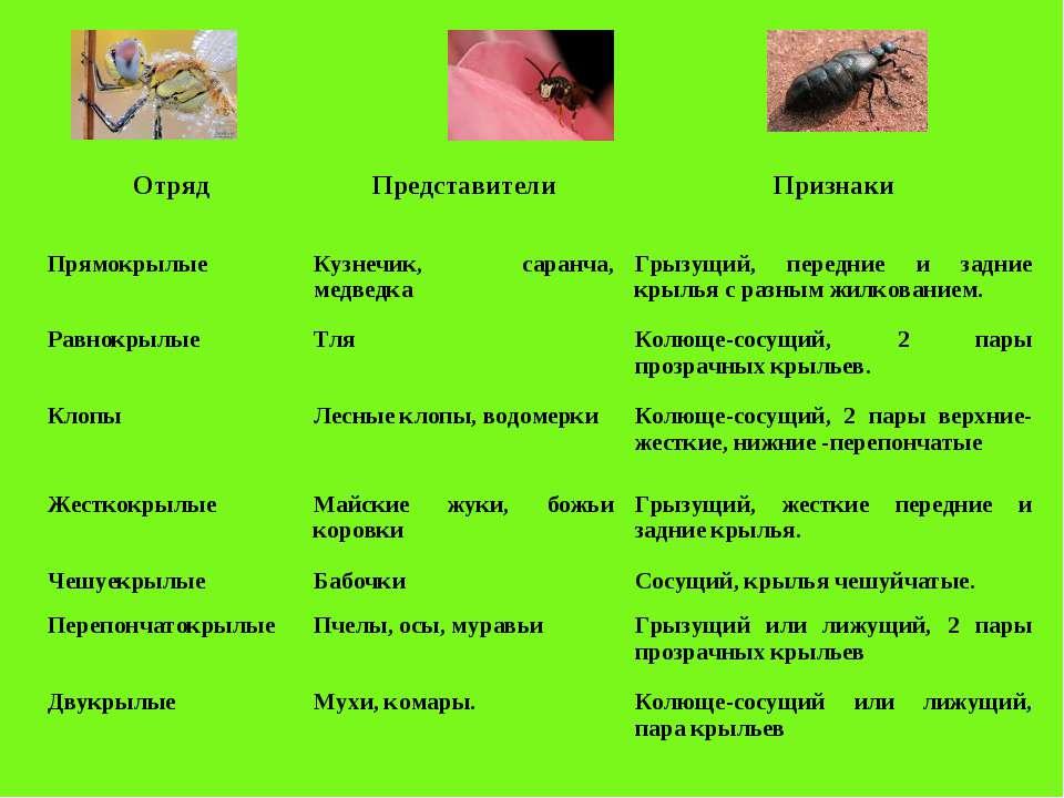 Отряд Представители Признаки Прямокрылые Кузнечик, саранча, медведка Грызущий...