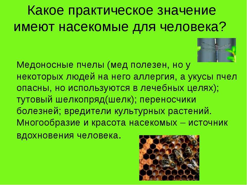 Какое практическое значение имеют насекомые для человека? Медоносные пчелы (м...