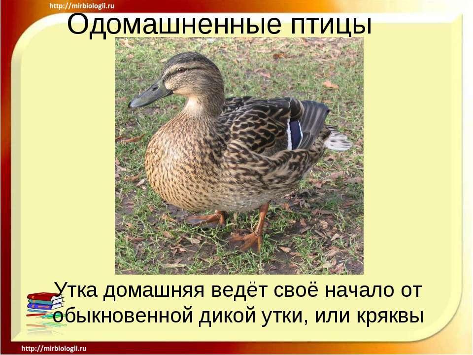 Поздравлении с днем рождения на русском