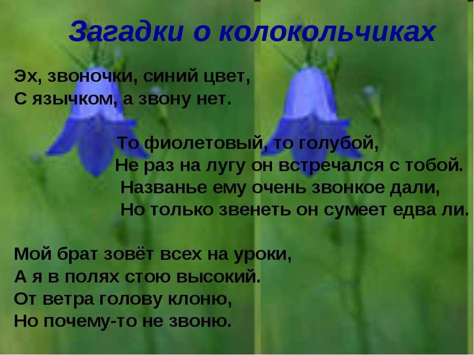 Загадки о колокольчиках Эх, звоночки, синий цвет, С язычком, а звону нет. То ...