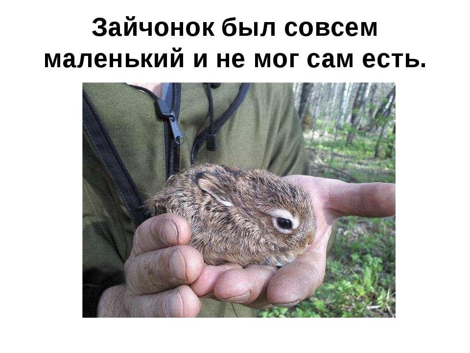 Зайчонок был совсем маленький и не мог сам есть.