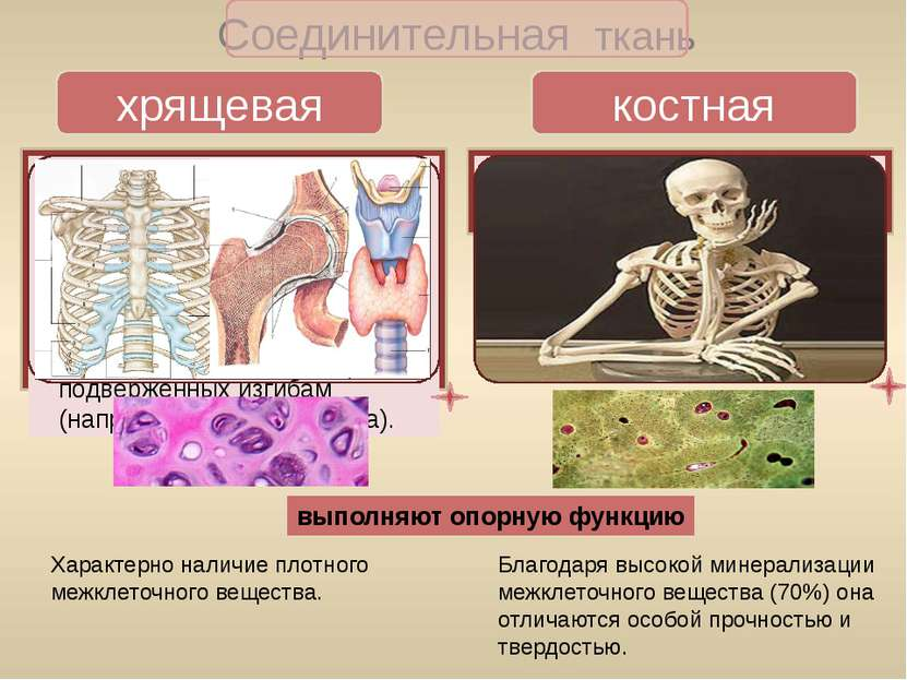 Мышечная ткань гладкая поперечно-полосатая скелетная сердечная состоит стенка...