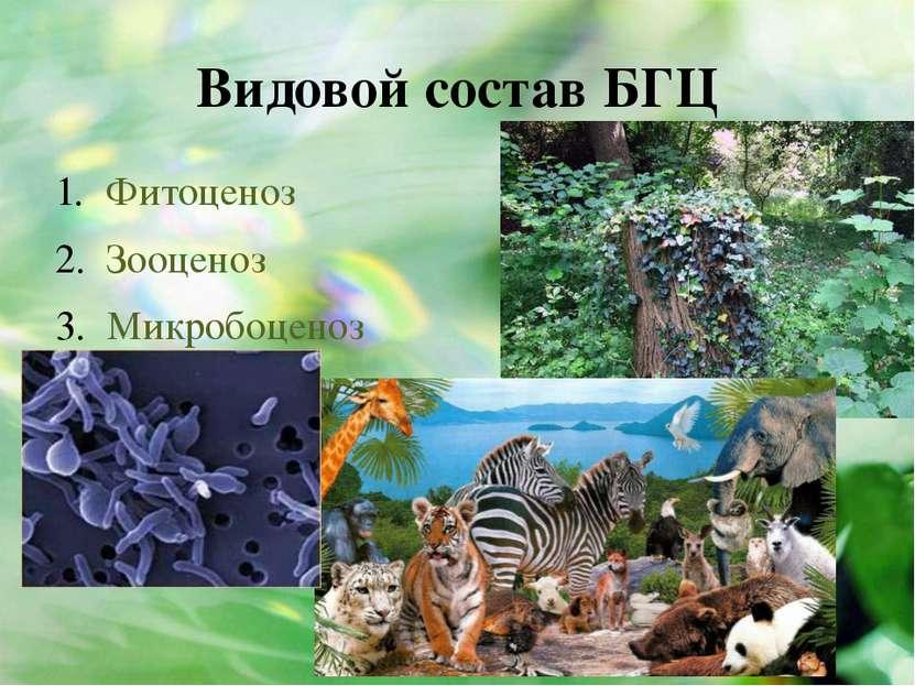 Видовой состав БГЦ Фитоценоз Зооценоз Микробоценоз