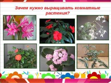 Зачем нужно выращивать комнатные растения?
