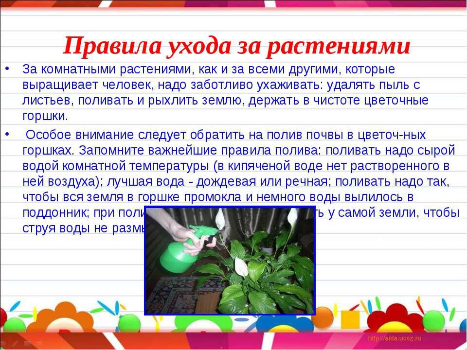 Уход за комнатным растениями в домашних условиях 362