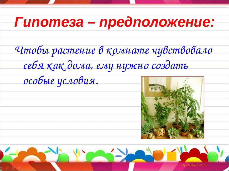 Гипотеза – предположение: Чтобы растение в комнате чувствовало себя как дома,...
