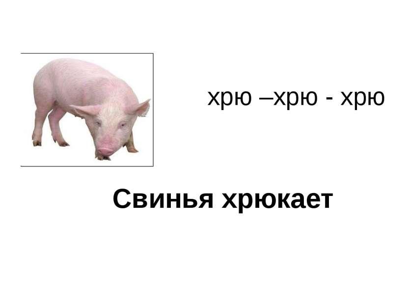 хрю –хрю - хрю Свинья хрюкает