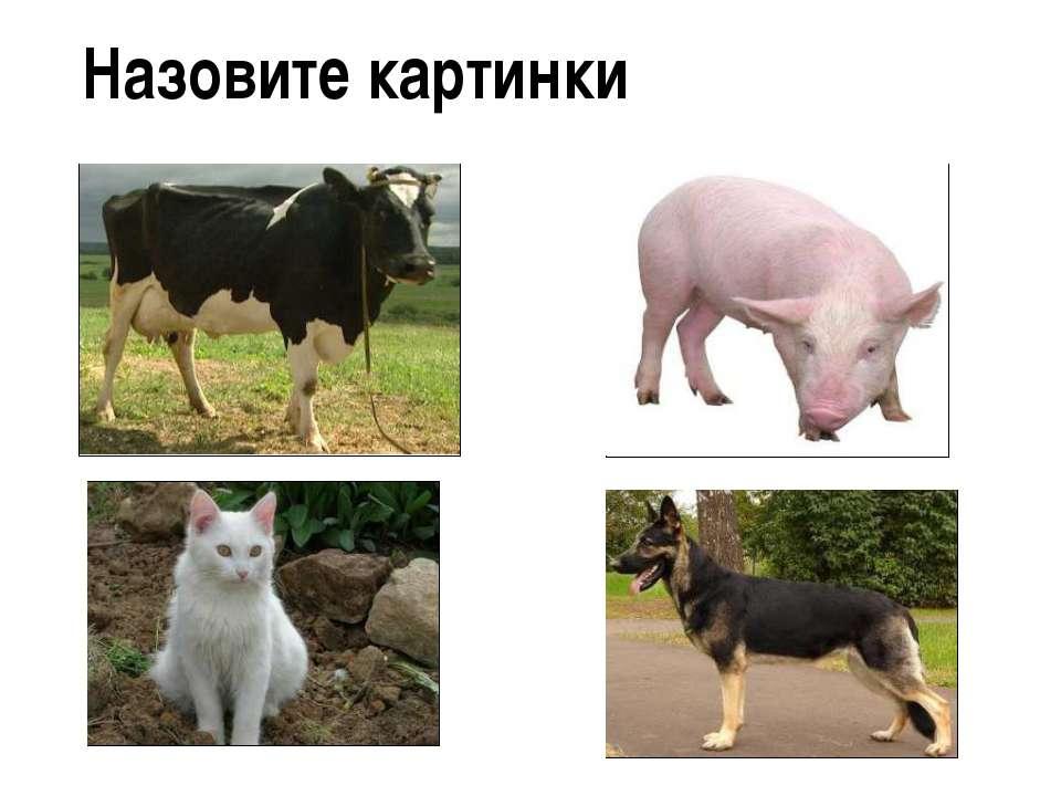 Назовите картинки