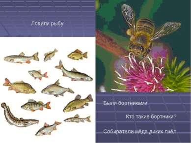 Ловили рыбу Были бортниками Кто такие бортники? Собиратели мёда диких пчёл.