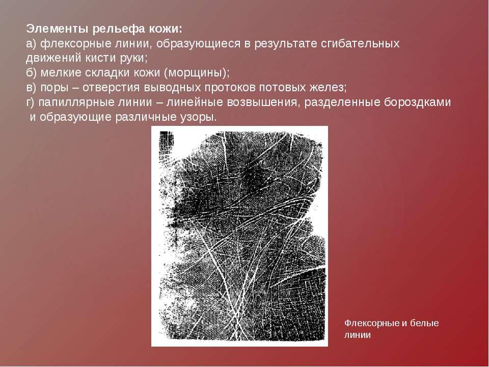 Элементы рельефа кожи: а) флексорные линии, образующиеся в результате сгибате...