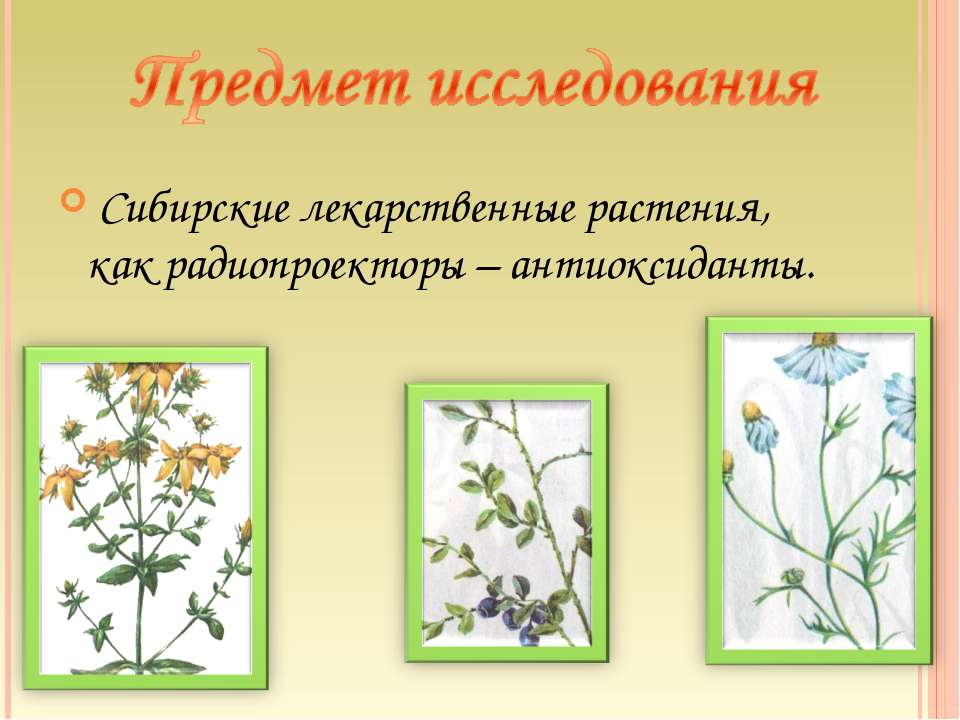 Сибирские лекарственные растения, как радиопроекторы – антиоксиданты.