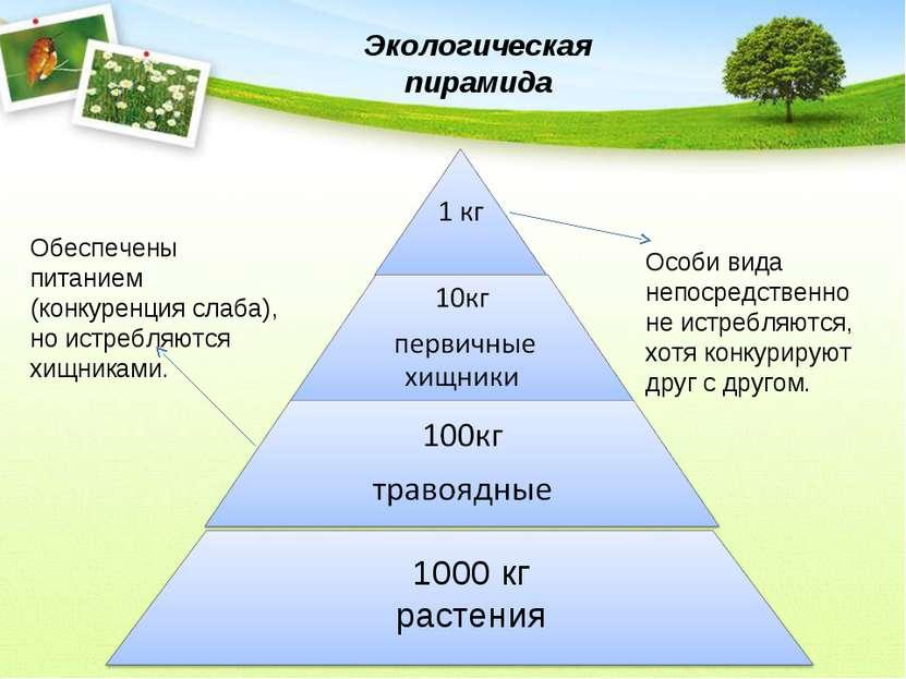 1000 кг растения Обеспечены питанием (конкуренция слаба), но истребляются хищ...