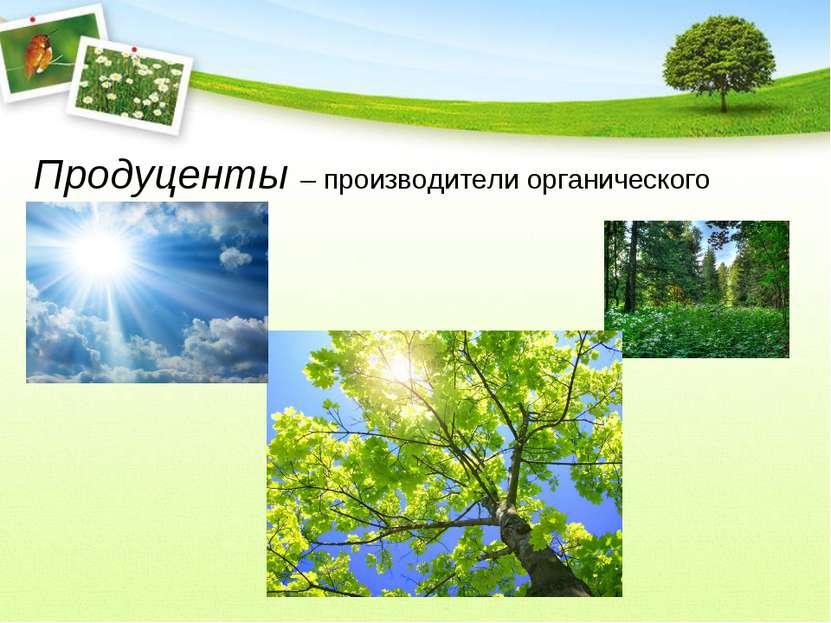 Продуценты – производители органического вещества.