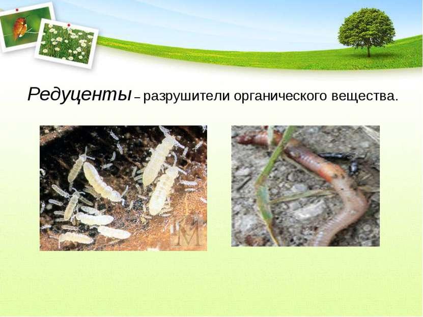 Редуценты – разрушители органического вещества.