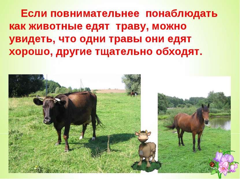 Если повнимательнее понаблюдать как животные едят траву, можно увидеть, что о...
