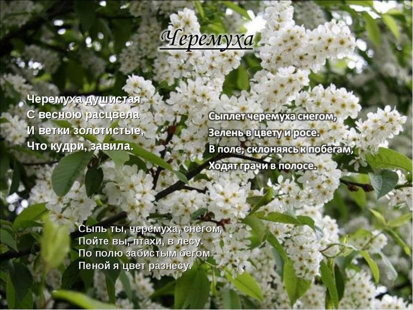 Черемуха душистая С весною расцвела И ветки золотистые, Что кудри, завила. Сы...