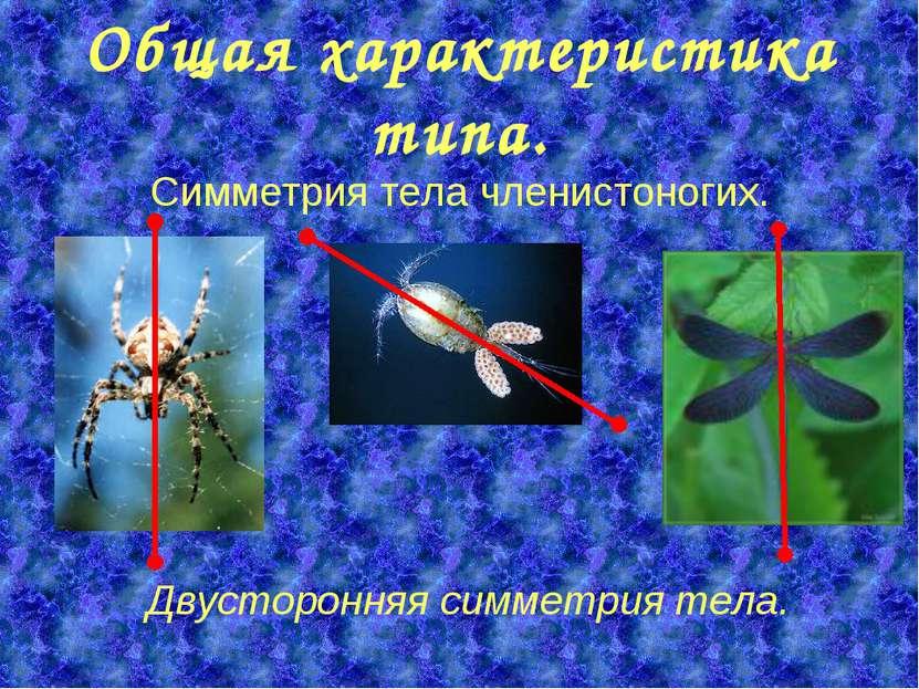 Общая характеристика типа. Симметрия тела членистоногих. Двусторонняя симметр...