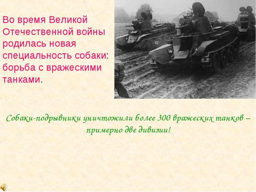 Во время Великой Отечественной войны родилась новая специальность собаки: бор...