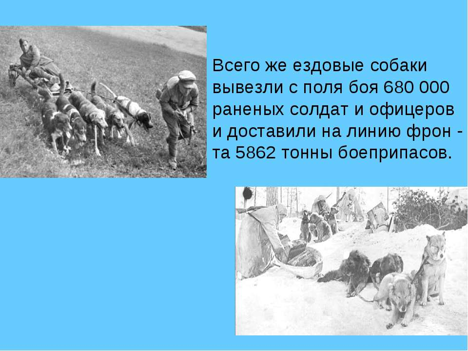 Всего же ездовые собаки вывезли с поля боя 680 000 раненых солдат и офицеров ...