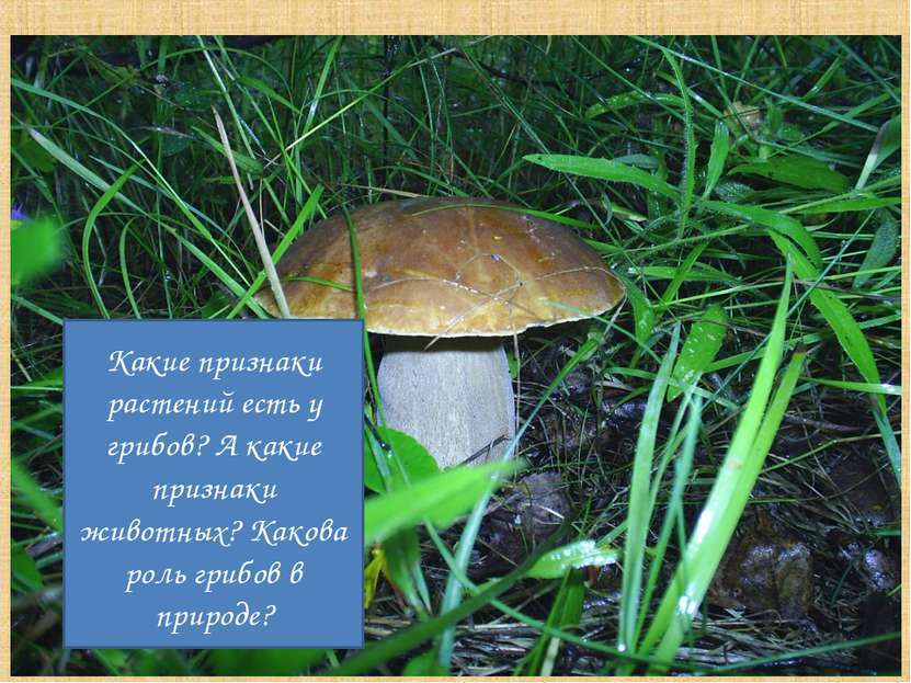 Какие признаки растений есть у грибов? А какие признаки животных? Какова роль...