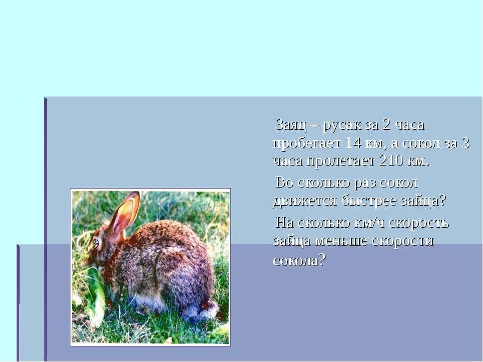 Заяц – русак за 2 часа пробегает 14 км, а сокол за 3 часа пролетает 210 км. В...