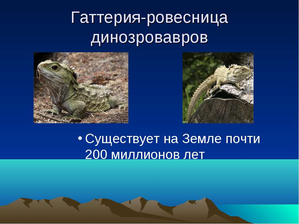 Гаттерия-ровесница динозровавров Существует на Земле почти 200 миллионов лет