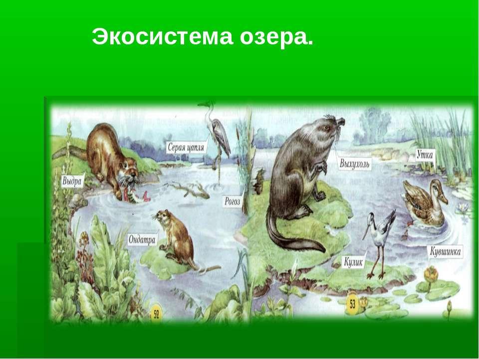 Экосистема озера.