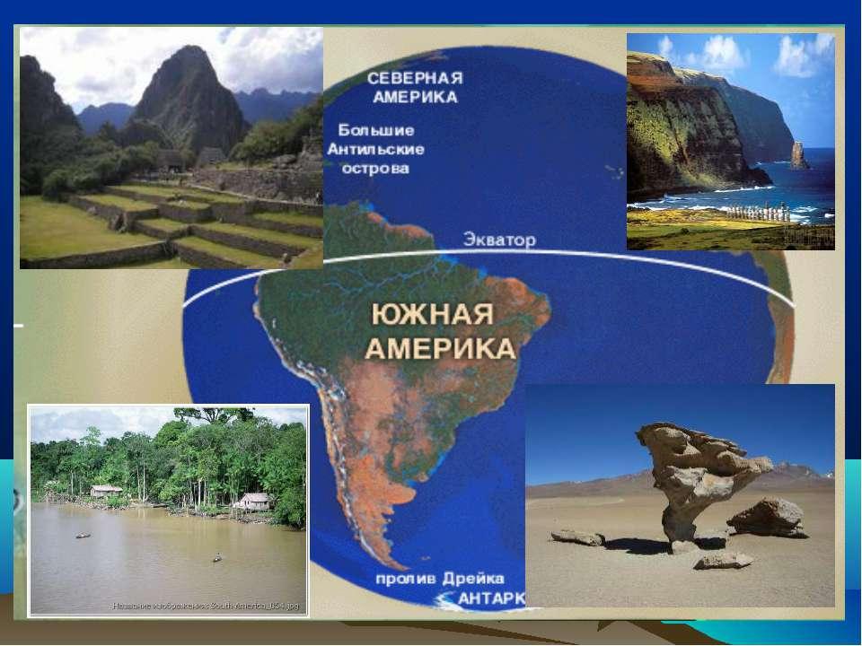 Презентация Животный Мир Южной Америки