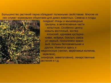 Большинство растений парка обладают полезными свойствами. Многие из них служа...
