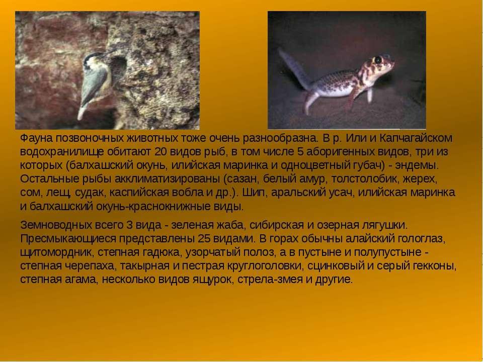 Фауна позвоночных животных тоже очень разнообразна. В р. Или и Капчагайском в...