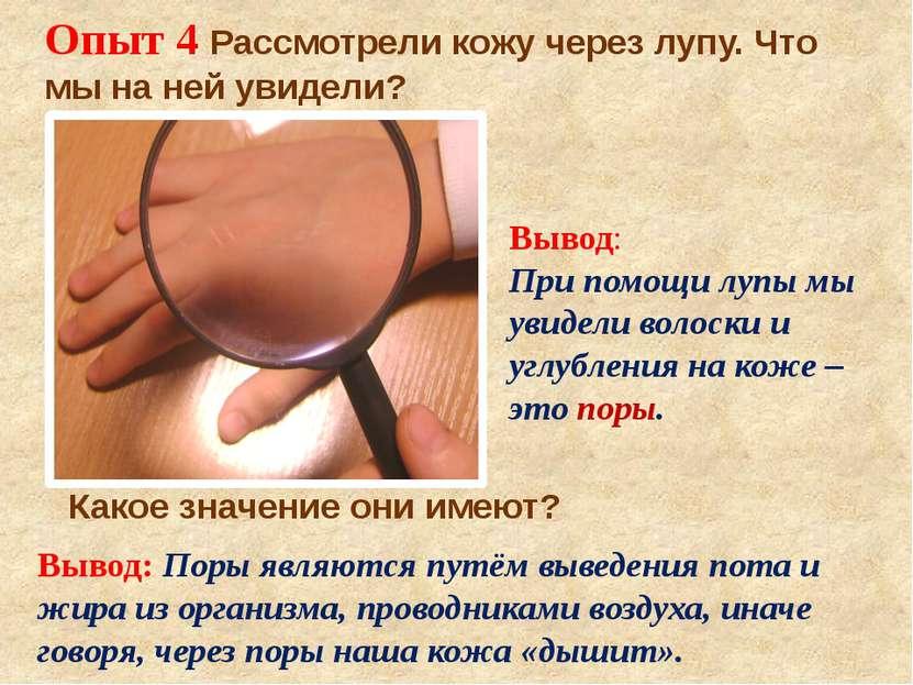 Опыт 4 Рассмотрели кожу через лупу. Что мы на ней увидели? Вывод: При помощи ...